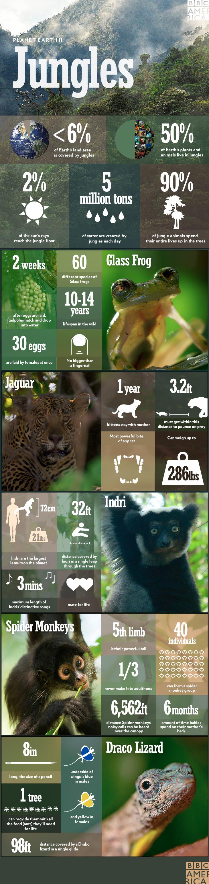 PEII_infographic_jungles_2