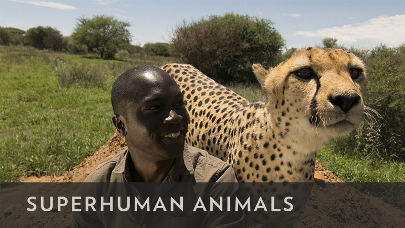 superhumananimals