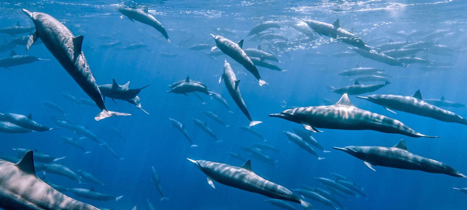 BBCA_Hunt_dolphins_1920x1080