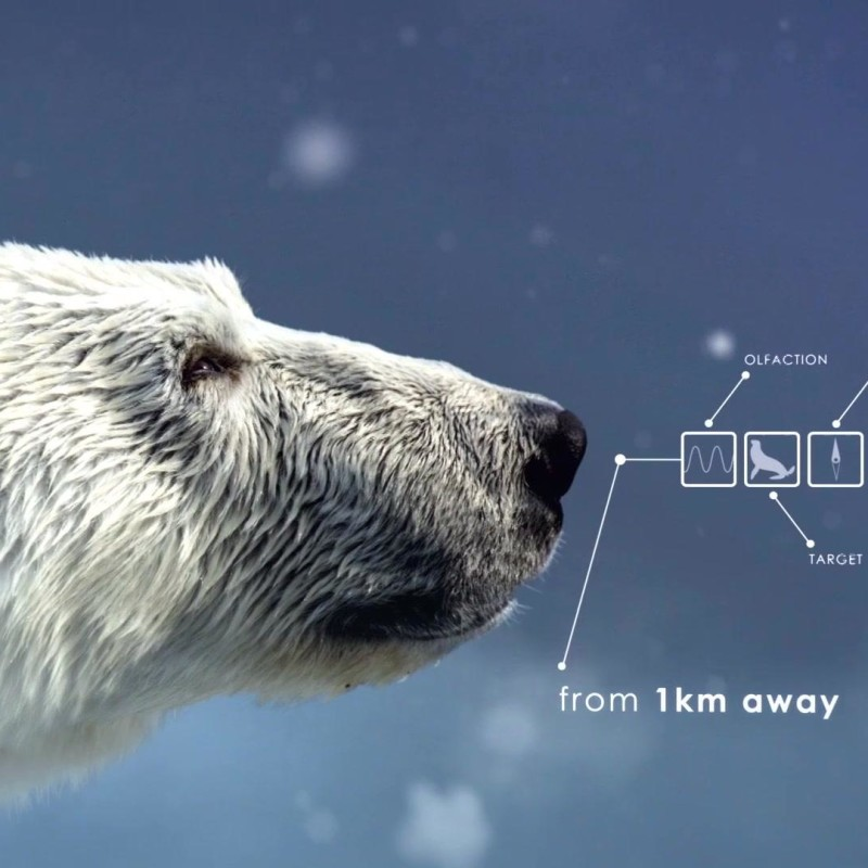 The_Hunt_S1_Social_Animation_1_Polar_Bear_YouTube_Preset_1920x1080_706854467897