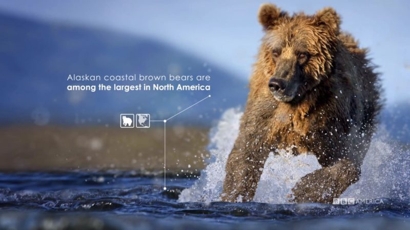 The_Hunt_S1_Social_Animation_4_Brown_Bear_YouTube_Preset_1920x1080_712137795788