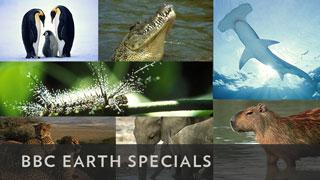 BBCA_EarthSpecials_.com_320x180