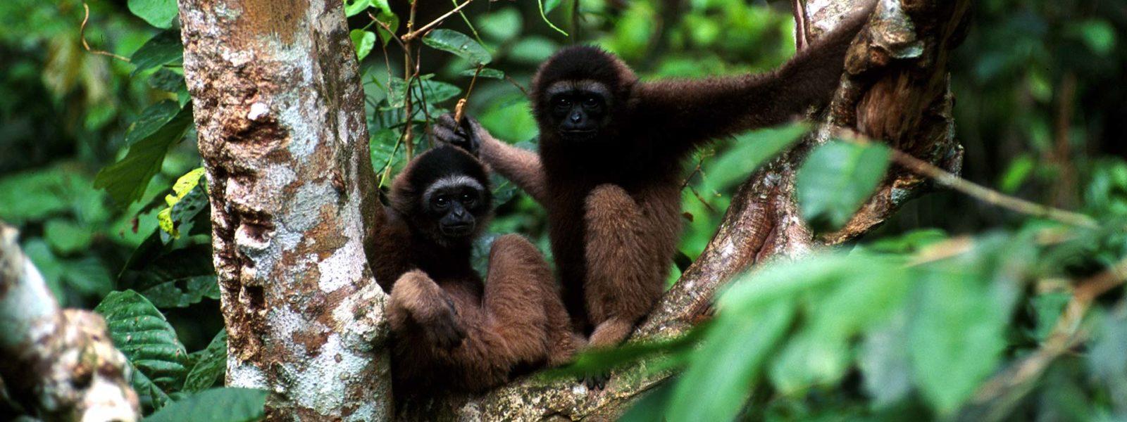 BBCA_EarthSpecials_JungleCanopy