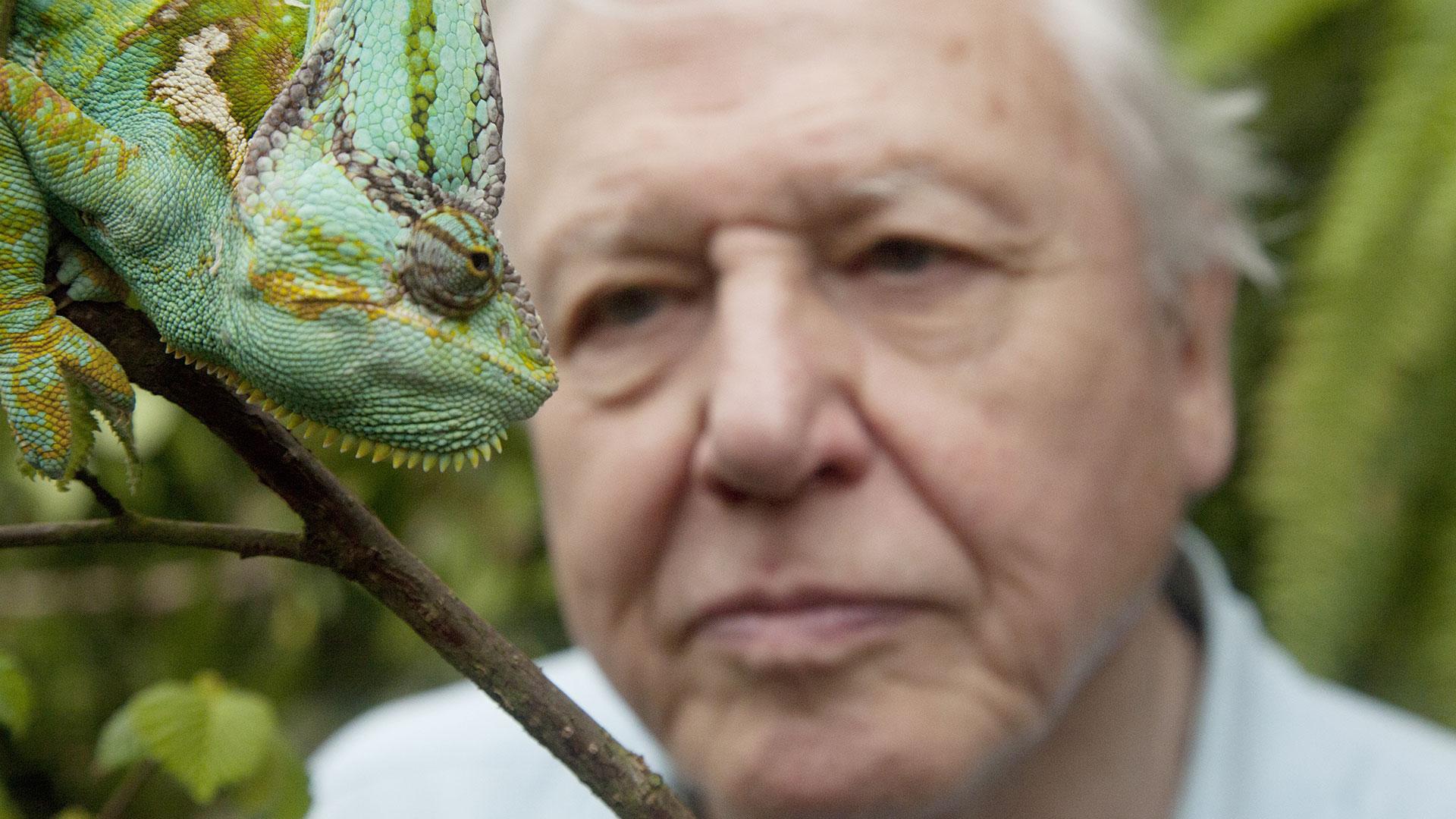 David Attenborough S Natural Curiosities Season  Episode