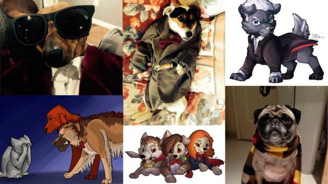 Dogtor Who (Photos: Instagram/Tumblr)