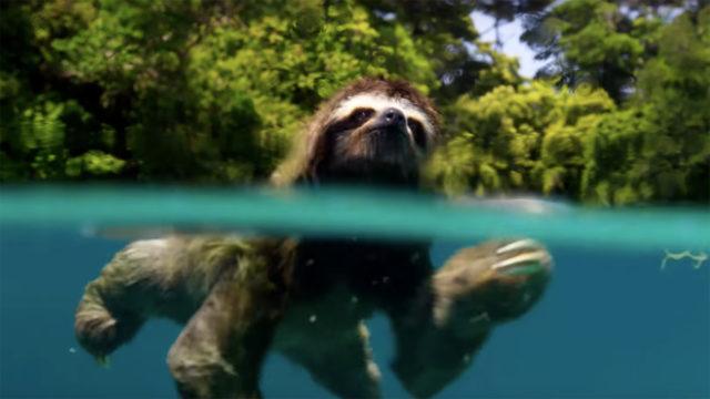 anglo_2000x1125_sloth