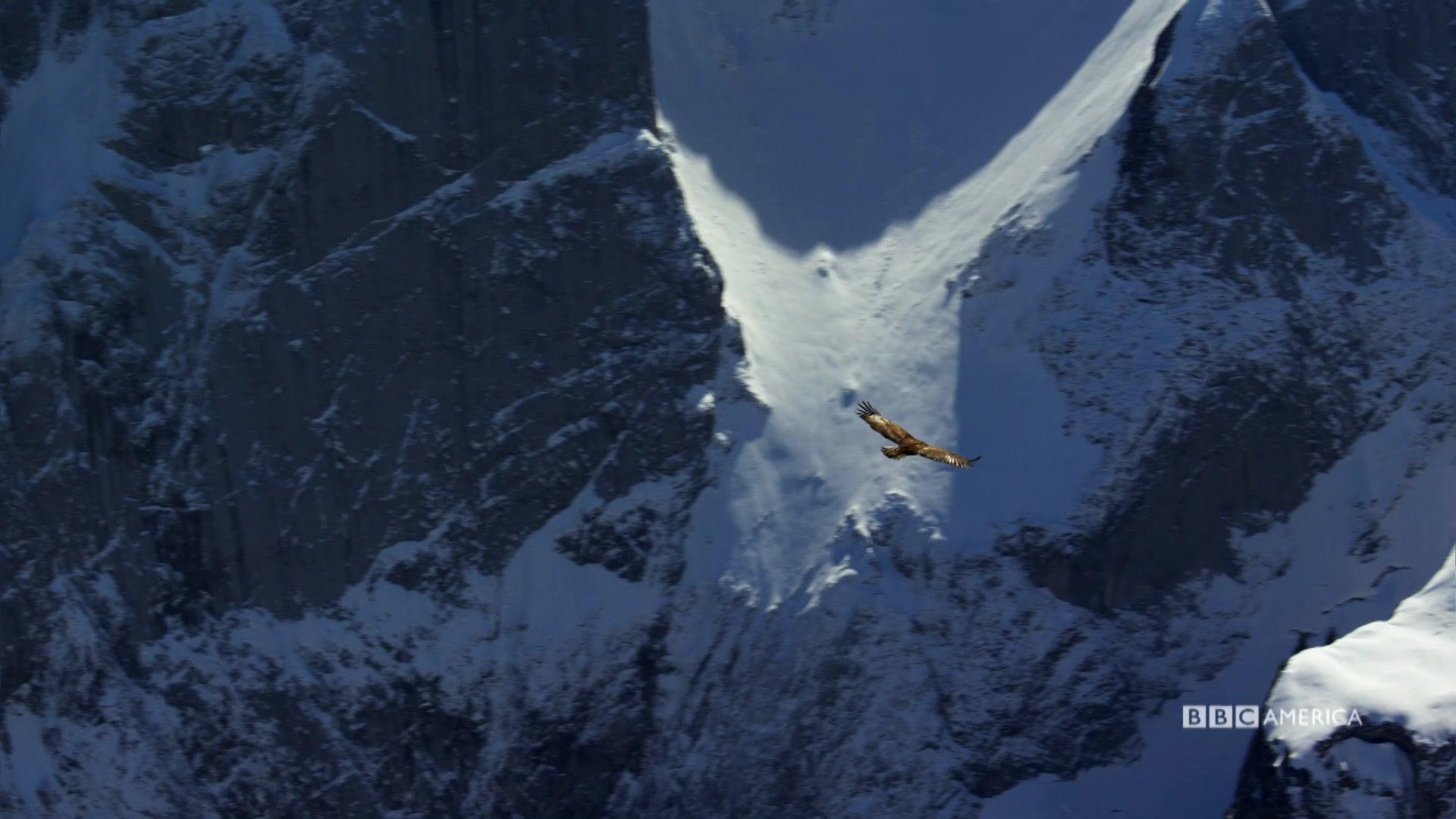 Sneak Peek Golden Eagles In The Alps