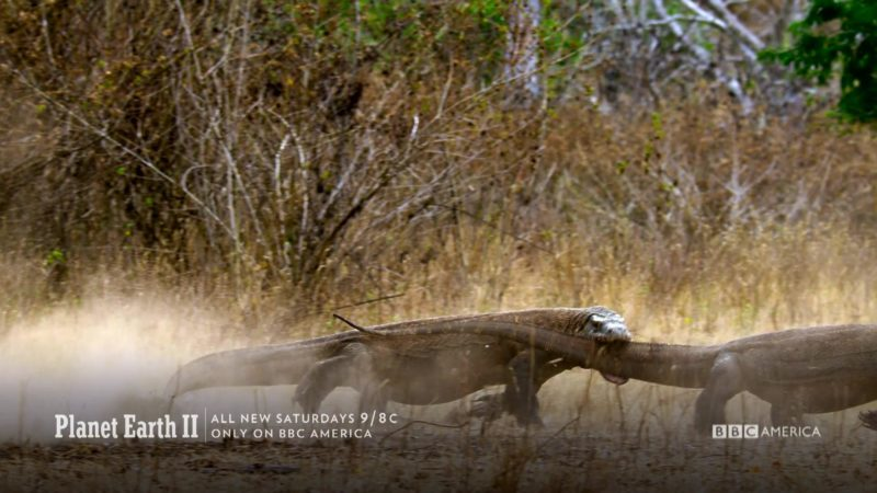 Planet_Earth_II_Closer_Look_Ep_1_Komodo_Dragon_All_New_Saturdays_Land_Rover_2505_YouTubePreset_1920x1080_879809091866