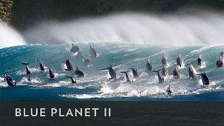 BBCA_BluePlanetII_320x180