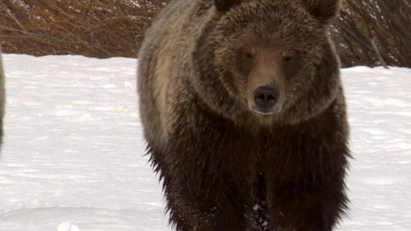 One_Amazing_Summer_Yellowstone_Prem_30_SAT_YouTube_Preset_1920x1080_1309192771835