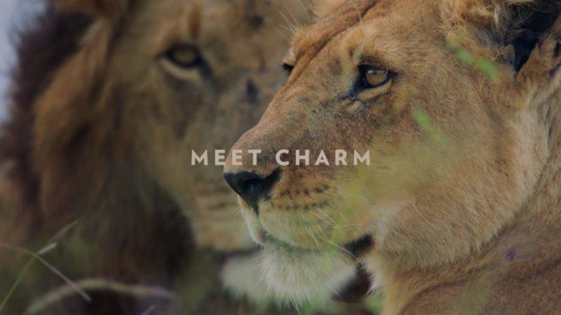 Dynasties_S01_Character_Spot_Lion_15_Sat_Jan_19_1920x1080_1403257411754