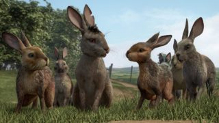 anglo_2000x1125_watershipdown