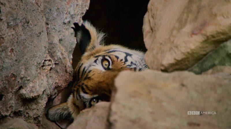 Dynasties_S01_Sneak_Peek_103_Tiger_135_QUICKEN_LOANS_1920x1080_1433148483570