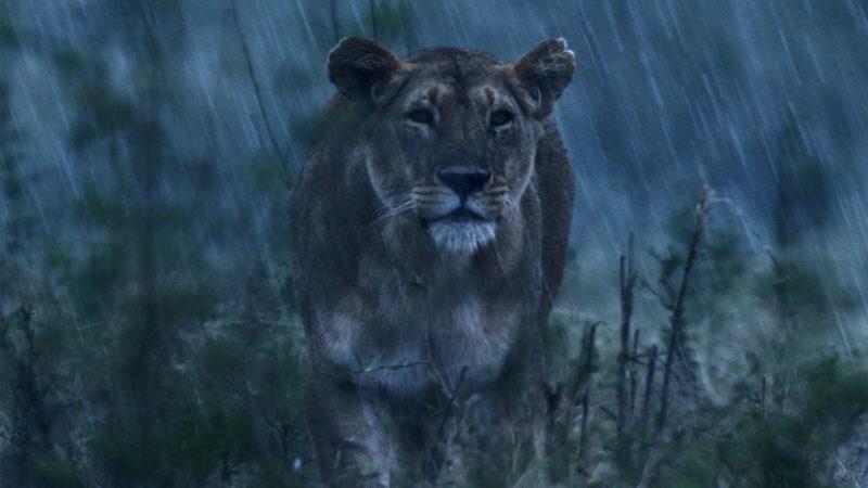 Lion_1920x1080-mpx