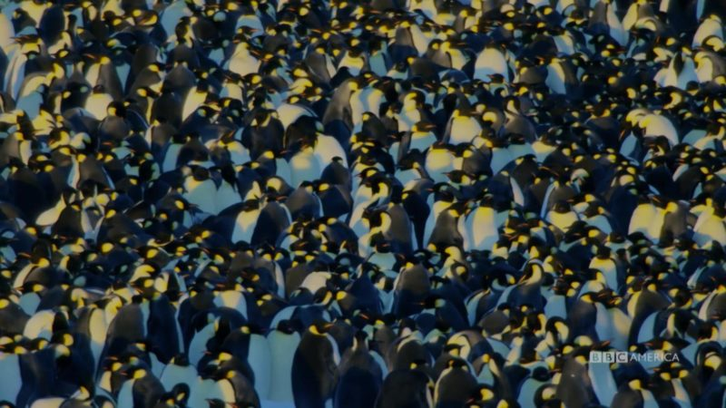 Dynasties_S01_Sneak_Peek_105_Emperor_Penguin_SOCIAL_QUICKEN_LOANS_1920x1080_1438307395729