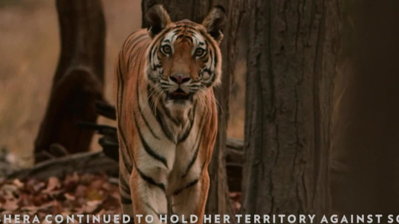 Dynasties_S01_What_Happened_Next_TIGER_16X9_1920x1080_1436148803588