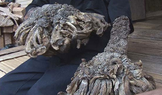 """Science That Should Be Fiction – Meet the """"Treeman"""""""