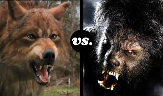 Grrrrr! Taylor Lautner's Jacob Black Faces Benicio Del Toro's Beastly Alter Ego in a Werewolf Tourney
