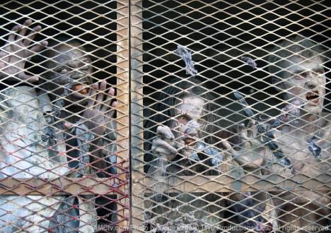 Walkers in Episode 5 of The Walking Dead