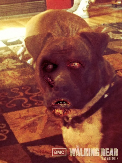 Zombified Pets in AMC's Dead Yourself App 7 - Zombified Pets in AMC's Dead Yourself App