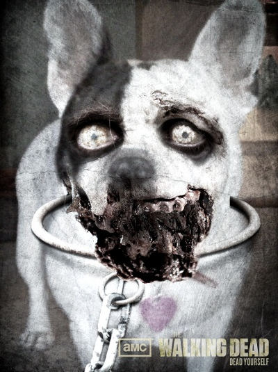 Zombified Pets in AMC's Dead Yourself App 2 - Zombified Pets in AMC's Dead Yourself App