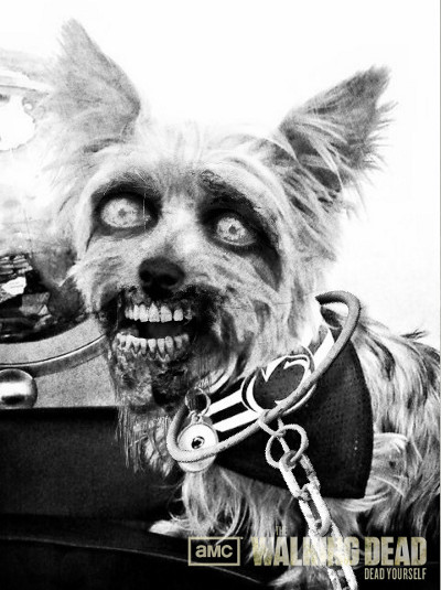 Zombified Pets in AMC's Dead Yourself App 9 - Zombified Pets in AMC's Dead Yourself App