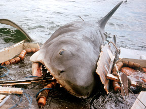 jaws.288