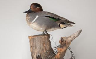 im1-dave-duck-325.jpg