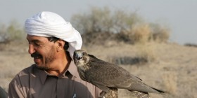 Disarming-Falcons-Key-Image---Photo-by-Albert-Larew