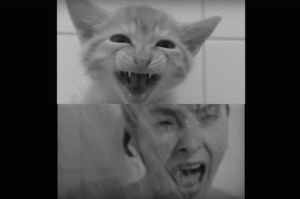 Psycho Shower Scene Becomes a Cuddly Massacre With Kittens