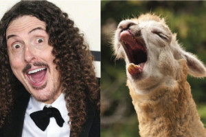 Upcoming Comedy Bang! Bang! Guests and Their Llama Look-Alikes