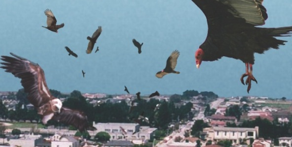 birdemic_592x299-7