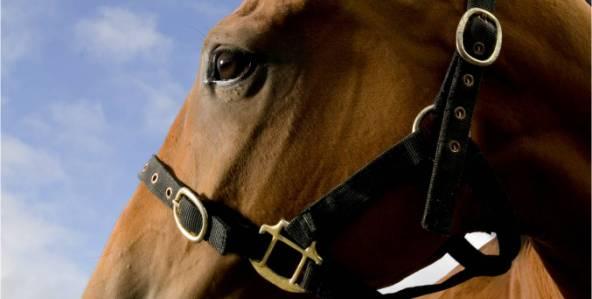 horses_592x299-7