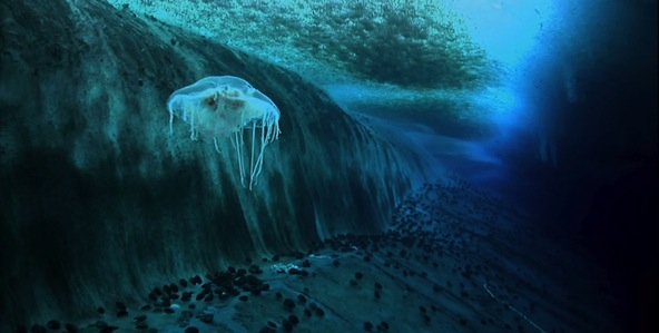 encounters-at-the-end-of-the-world_592x299-6
