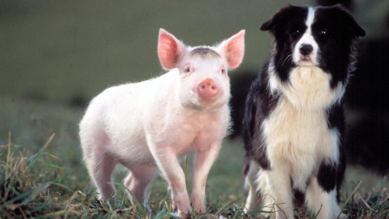 BABE, Babe the Pig, Fly the Australian Sheepdog, 1995.