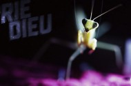 Experimental praying mantis from the Vimeo Fest