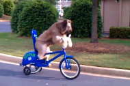This week's top trending videos starring a bike riding dog and the Staples Center