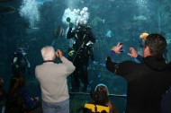Caring for the environment (and each other) at the Aquarium of the Pacific