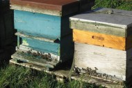 Building the perfect urban beehive