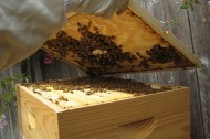 Urban beekeeping project aimed at Philadelphia's underserved youth