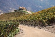 Chilean wines going green