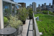 Maryland nursery specializes in plants for green roofs