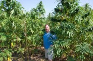 Hemp: the world's grooviest building material?