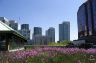 Toronto's green roofs mandate: the right approach?