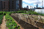 Five organizations fighting food poverty with organic farming