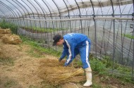 Great green vacations: volunteer on an organic farm