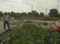 Justin Booz turns a Superfund site into a public food garden.