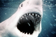 "Which ""Jaws"" Movie Has the Most Teeth?"
