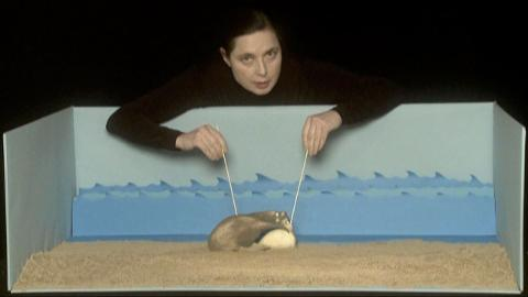 Isabella Rossellini finds that size does matter in the heirarchy of elephant seals.