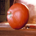 attack-killer-tomatoes-125.jpg